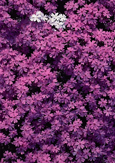 AOFOTO 6x8ft Purple Flowers Background Beautiful Spring