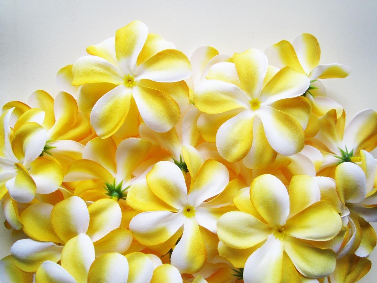 100-Yellow-White-Hawaiian-Plumeria-Frangipani-Silk-Flower-Heads-3-Artificial-Flowers-Head-Fabric-Floral-Supplies-Wholesale-Lot-for-Wedding-Flowers-Accessories-Make-Bridal-Hair-Clips-Headbands-Dress