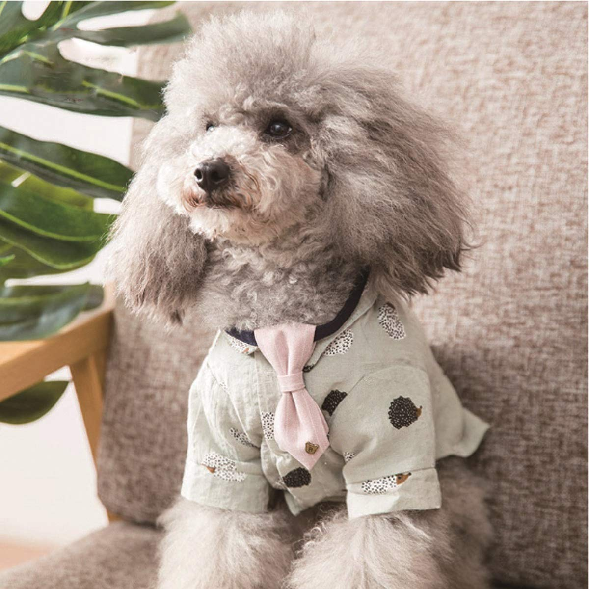 HENGTONGTONGXUN Accesorios para Mascotas, Collar para Perros ...