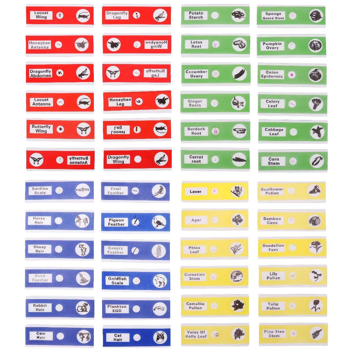 UEETEK 48pcs Campioni di plastica per bambini Campioni di microscopio preparati Scivoli di animali Piante di insetti Fiori per microscopi stereo (un colore per scatola, giallo / rosso / verde / blu)