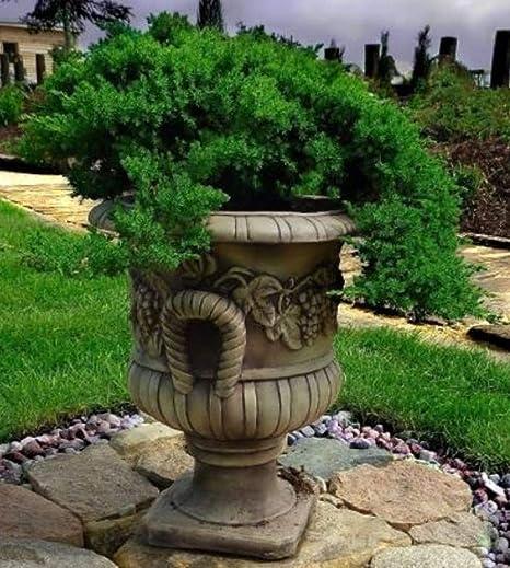 Casa Padrino Maceta Barroco Ø 44 x H. 51 cm - Jardinera - Accesorios de Jardín Deco - ¡Especial!: Amazon.es: Hogar