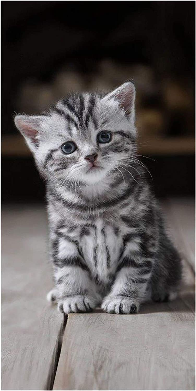 Sweet Animals Gato Kitten Toalla de Playa 70 x 140 cm: Amazon.es: Hogar