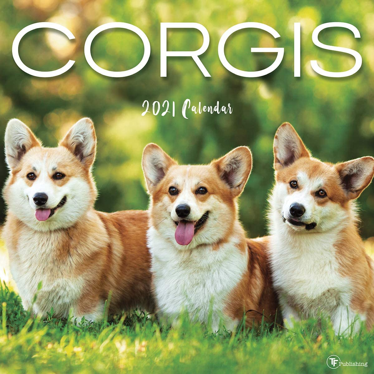 "TF PUBLISHING 2021 Corgis Monthly Wall Calendar - Photographs Appointment Tracker with Contacts and Notes Page - Enhance Home or Office Planning and Organization - Premium Gloss Paper 12""x12"""