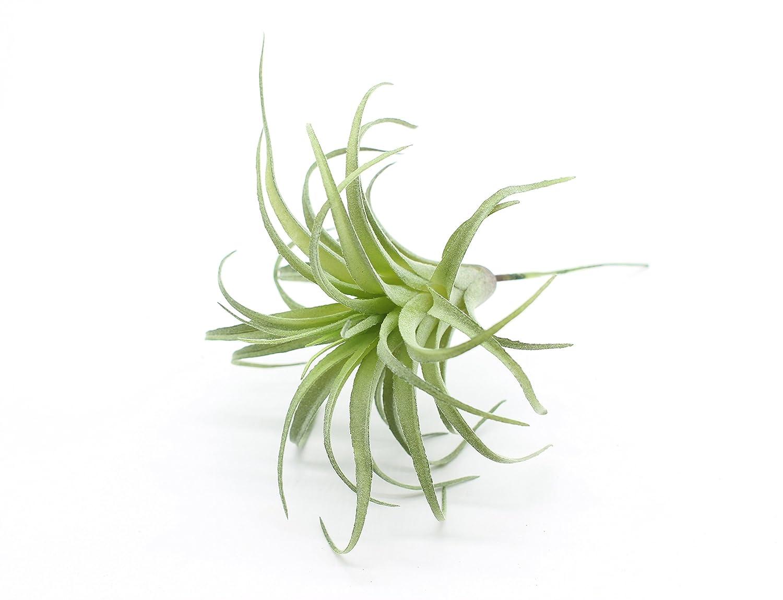 Yokoke Artificial Pineapple Grass Air Plants Fake Flowers Faux Succulents Flocking Tillandsia Bromeliads Home Garden Decor 4 Pcs 11 Inches Assortment