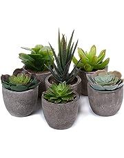 T4U Artificial Serie de Plantas Suculentas Hierba Decorativa de Plástico Colección 1, Paquete de 6