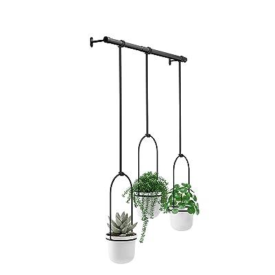 Umbra Triflora Hanging Planters for Window, Indoor Herb Garden, White/Black: Home & Kitchen