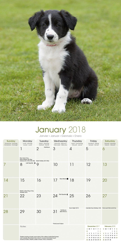 Border collie calendar dog breed calendars 2017 2018 wall border collie calendar dog breed calendars 2017 2018 wall calendars 16 month by avonside megacalendars 9781785800184 amazon books nvjuhfo Choice Image