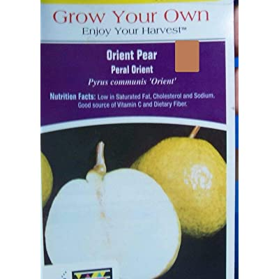 Orient pear, 1 Year Old grafted Plant, Shipped Bare Root : Garden & Outdoor