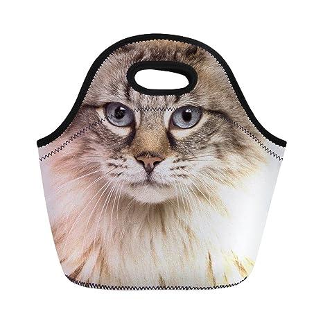 Amazon.com: coloranimal Zoo Animal Impresión 3d neopreno ...