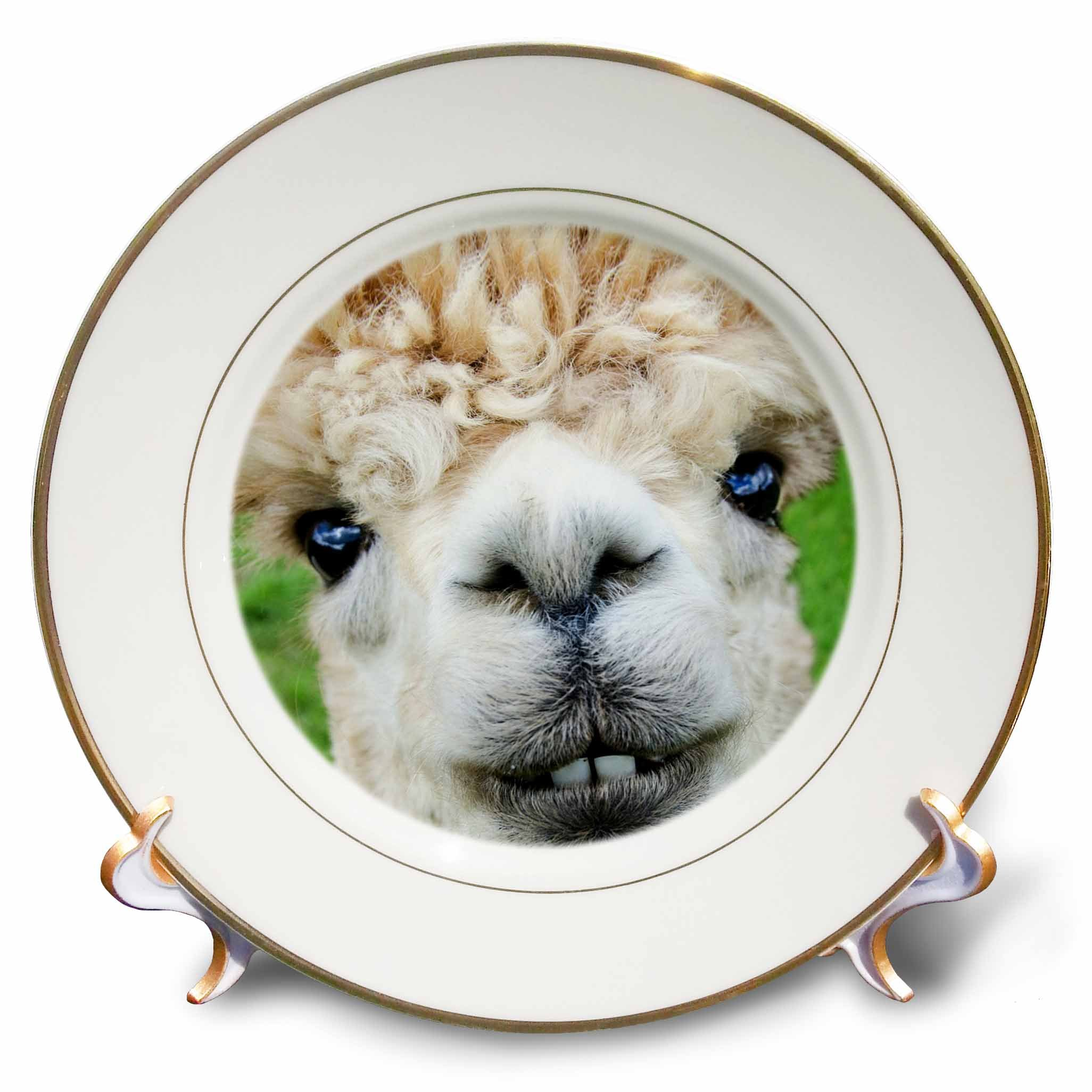 RinaPiro - Domestic Animals - Alpaca. Lama. South America. White. - 8 inch Porcelain Plate (cp_237102_1)