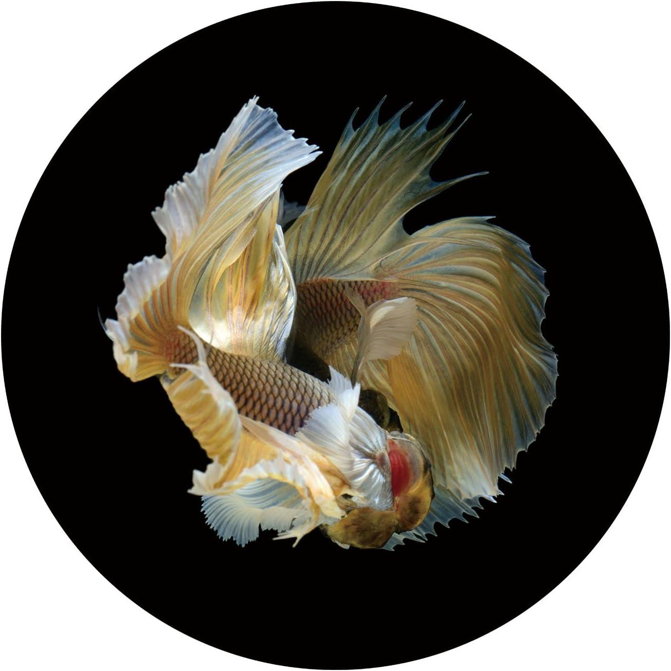 WunderBoard - Aluminum Metal Wall Art Decor Goldfish, Art Prints Framed, 20 inches (Silver)