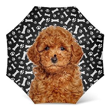 Amazoncom Miniature Poodle Dog Print Umbrella Windproof