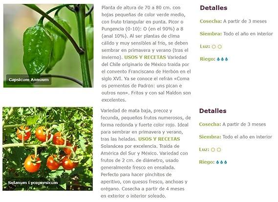 Huerto Urbano KIT Cultivar Hortalizas en Casa – Mesas Cultivo ...