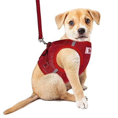 YHEGV ARNÉS para Perros Sin tirón Comodidad para Caminar Arnés ...