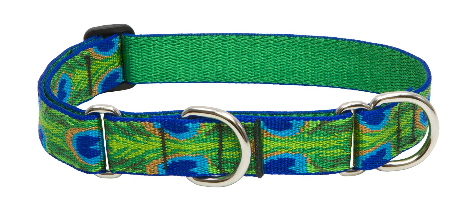1-Inch Width, 15-Inch to 22-Inch Lupine Tail Feathers Combo Dog Collar, 1-Inch Width, 15-Inch to 22-Inch Neck