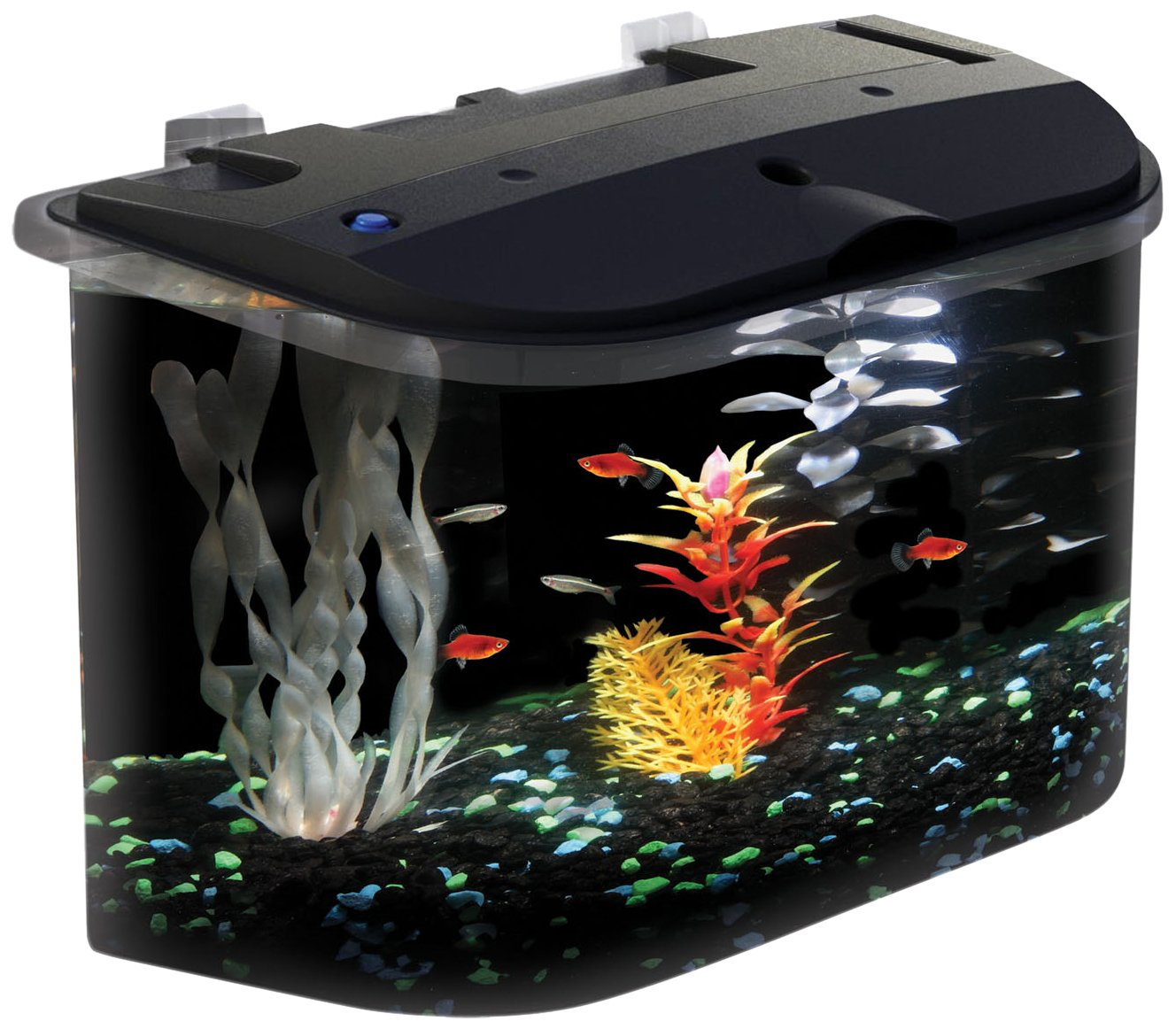 Fish aquarium is good in home - Amazon Com Api Panaview Aquarium Kit With Led Lighting And Power Filter 5 Gallon Fish Tank Pet Supplies