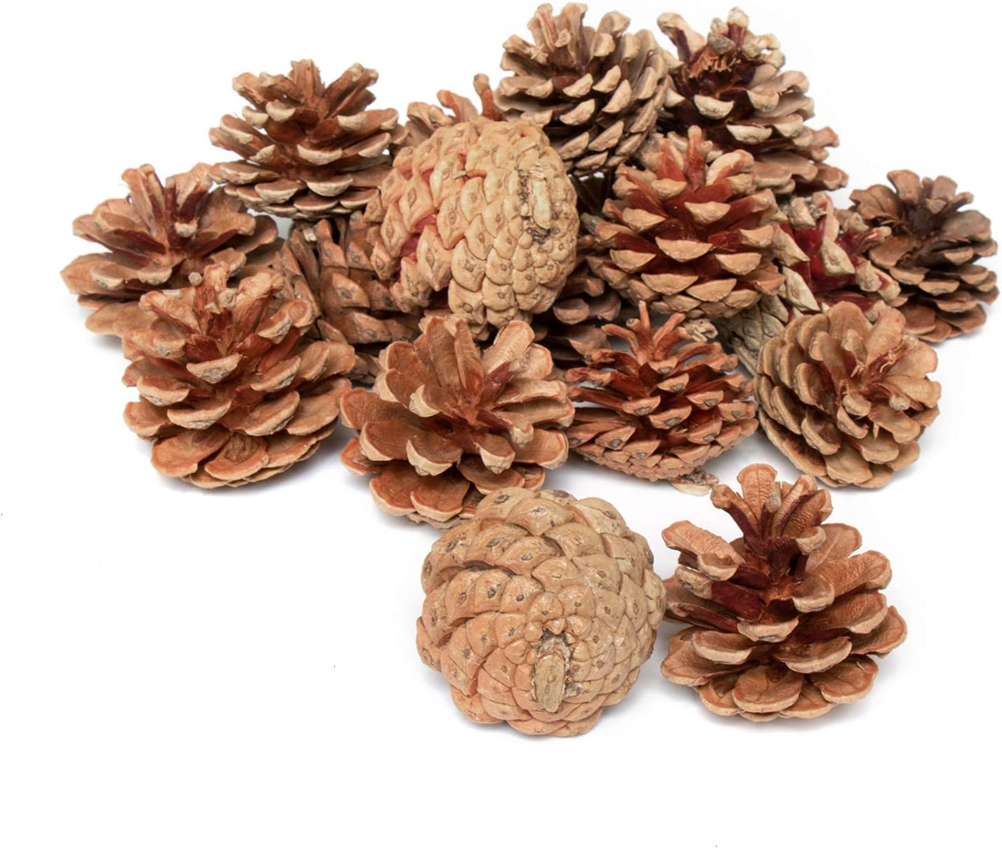 Rocinha Natural Pine Cones, 20pcs Pine Cones in Bulk, Fall Decor for Home Clearance,Crafts,Vase Filler, Christmas Tree Ornament.