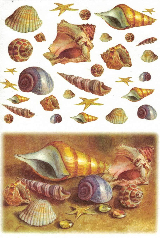 Motiv-Strohseide Shells Zita`s Creative Reispapier A4 Decoupage Papier Strohseidenpapier