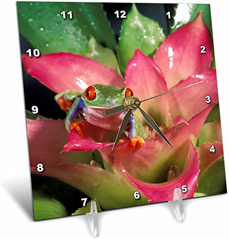 3dRose dc/_84122/_1 Red-eyed tree frog 6 by 6-Inch Michele Westmorland Desk Clock NA02 MWE0140