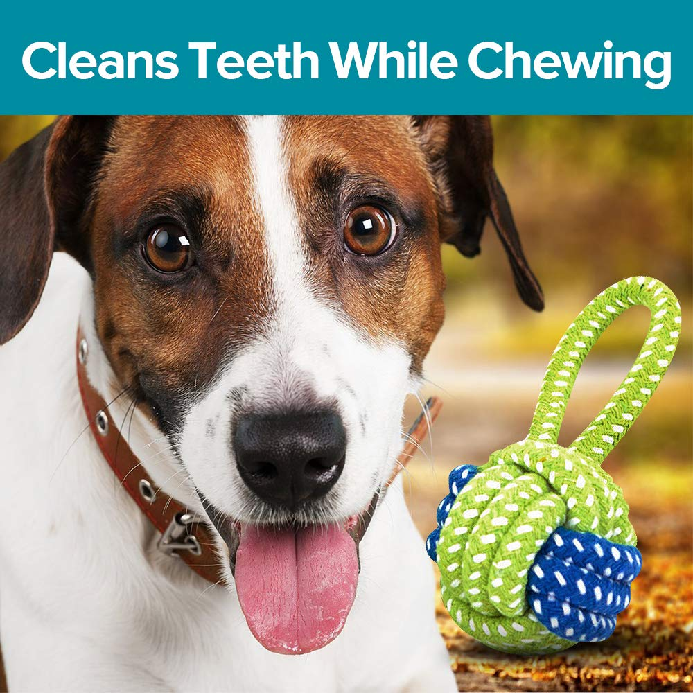 Watch No More Chewing: Dog-Training Tips for Chompers video