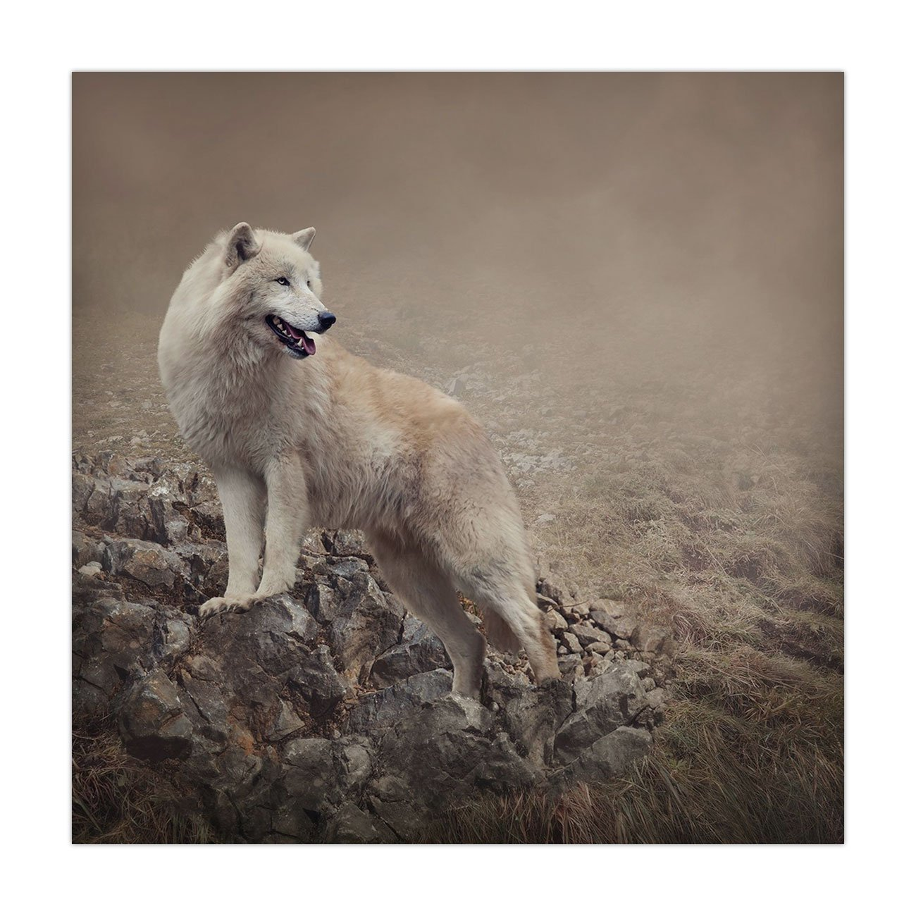 Polyester Square Tablecloth,Animal,White Wolf on Rocks at the Night Hazy Misty Weather Wildlife Nature Scenery Print Decorative,Warm Taupe,Dining Room Kitchen Picnic Table Cloth Cover,for Outdoor Indo