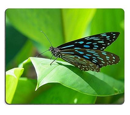 Yanteng Cojín de ratón Tony Natural Rubber Gaming Mariposa Azul y Hojas Verdes en la Naturaleza