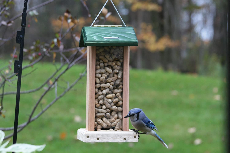 amazon com birds choice whole peanut blue jay feeder with green