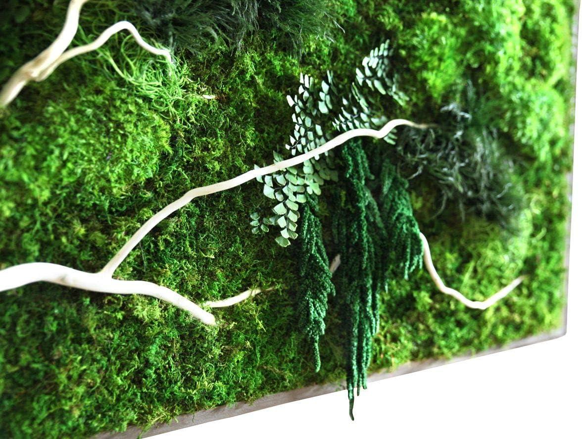 Fresh Green Moss Vine 6 Feet DALAMODA 6 Feet Preserved Moss Vine Floral Moss MossVine Garland