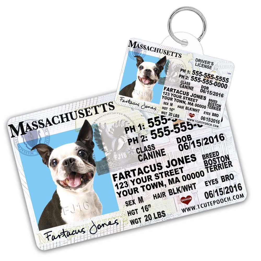 Massachusetts Driver License Custom Dog Tag for Pets and Wallet Card - Personalized Pet ID Tags - Dog Tags For Dogs - Dog ID Tag - Personalized Dog ID Tags - Cat ID Tags - Pet ID Tags For Cats by 1 Cute Pooch
