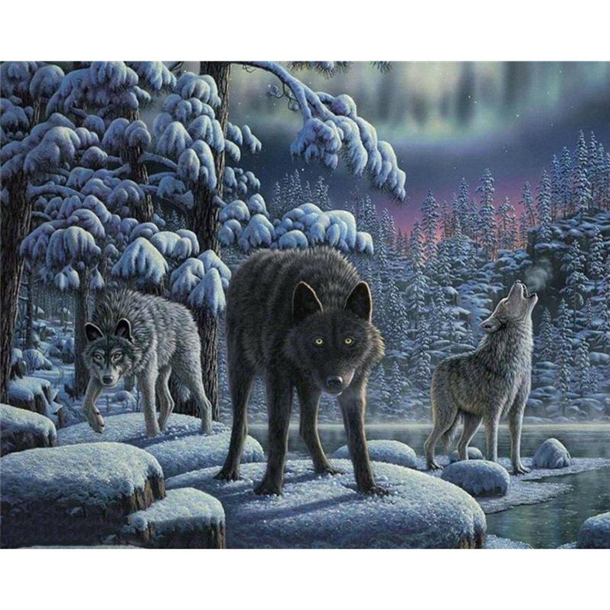 Shukqueen Diy Oil Painting, Adult's Paint by Number Kits, Acrylic Painting-Three Wolves 16X20 Inch (Framed Canvas)