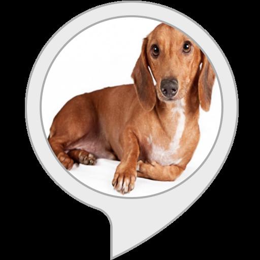 Best Dog Pets Dachshund