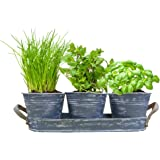 Geschenkartikel–Shopping Herb Garden with a three Herb Pots in Tray Basil Chives Earth Gift, Christmas Gift Idea