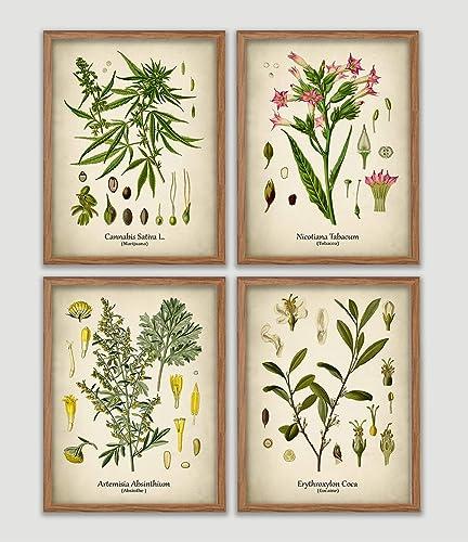 Amazon com: Drug Plants Vintage Print Set Cocaine Marijuana Absinthe