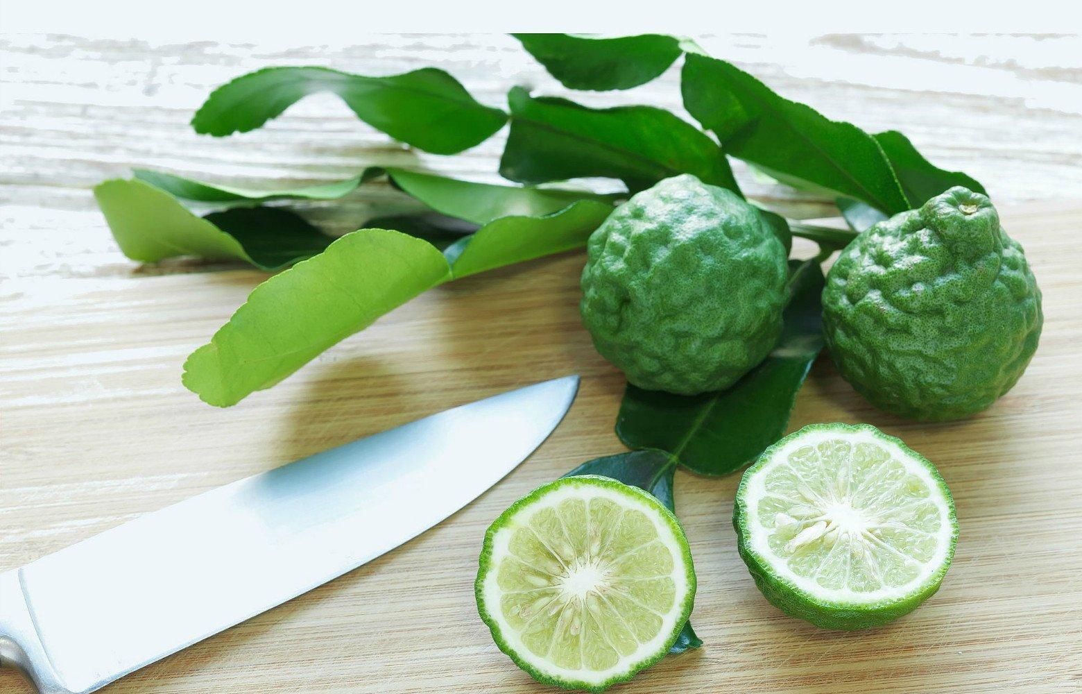 Kaffir Lime Tree-Fruit Bearing Size-Indoors/Out-NO Ship TX,FL,AZ,CA,LA,HI-5'' Pot by Hirt's Gardens (Image #1)