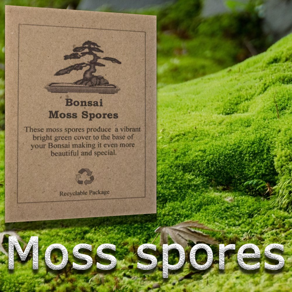Moss Spores These Spores Are The Perfect Addition To Your Bonsai