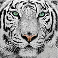 DCIDBEI 5D Diamond Painting Full Drill Tigre,Animales en