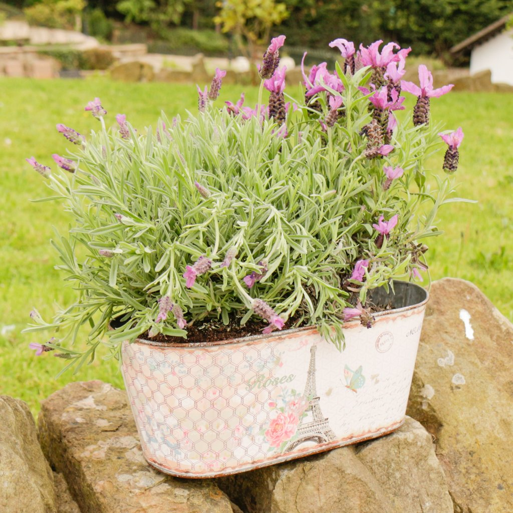 Large Zinc Vintage Parisian Postcard Windowsill Box Planter. Perfect For Growing Flowers, Plants, Herbs or Micro-herbs While Adding A Touch Of Shabby Chic Style To Your Home or Garden Or Would Make A Great Gift Idea. W32 x H13 x D16cm Dibor