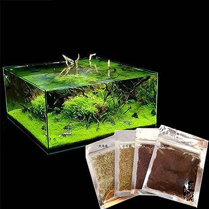 Merveilleux Aquarium Plant Seeds Aquatic Water Grass Plant Decoration As Garden Fish  Tank Foreground Plant (Small