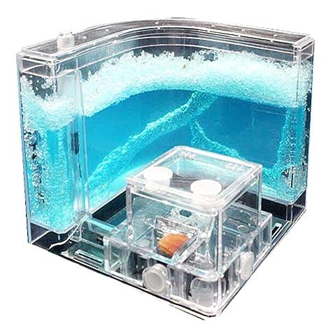 Nava Hormiguero con sistema de alimentación, diseño de laberinto, gel, color azul