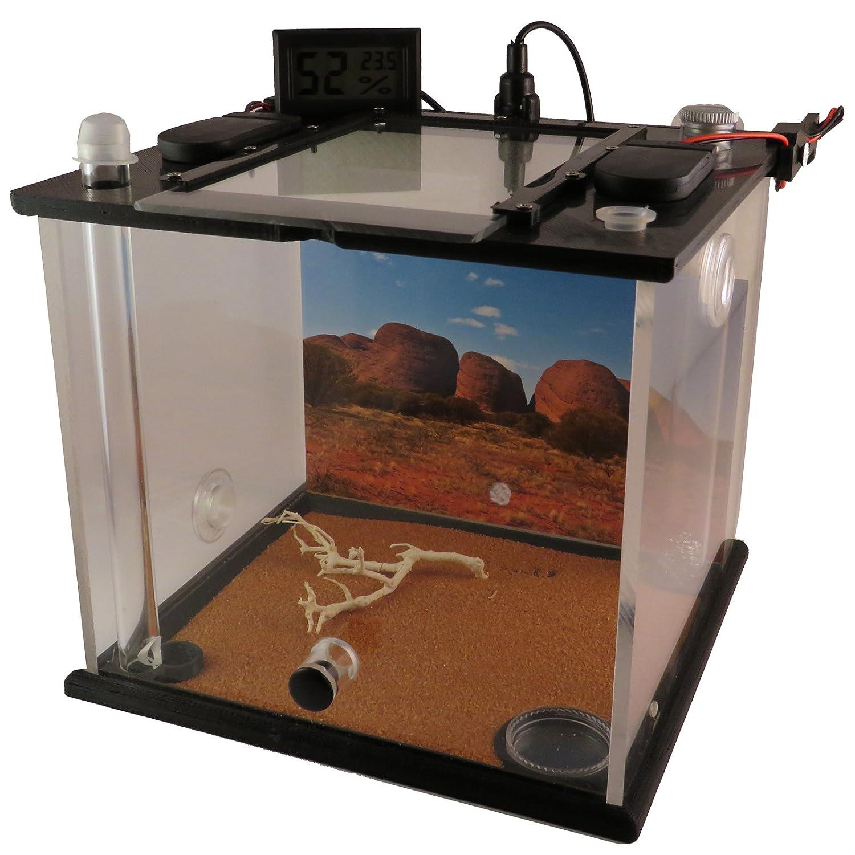 FOURMILIÉRE ANT FARM | Modèle Premium sans reine des fourmis Uluru (taille M) Antlife