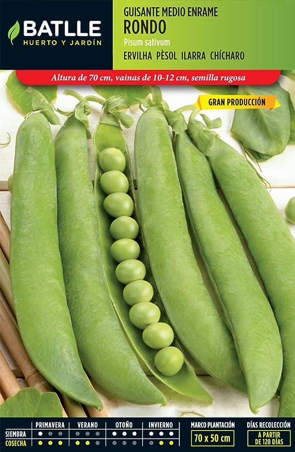 Semillas Leguminosas - Guisante medio enramo Rondo 5kg - Batlle ...