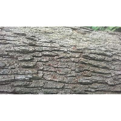 AchmadAnam - Live - 50 Cuttings White Oak Grafting : Garden & Outdoor