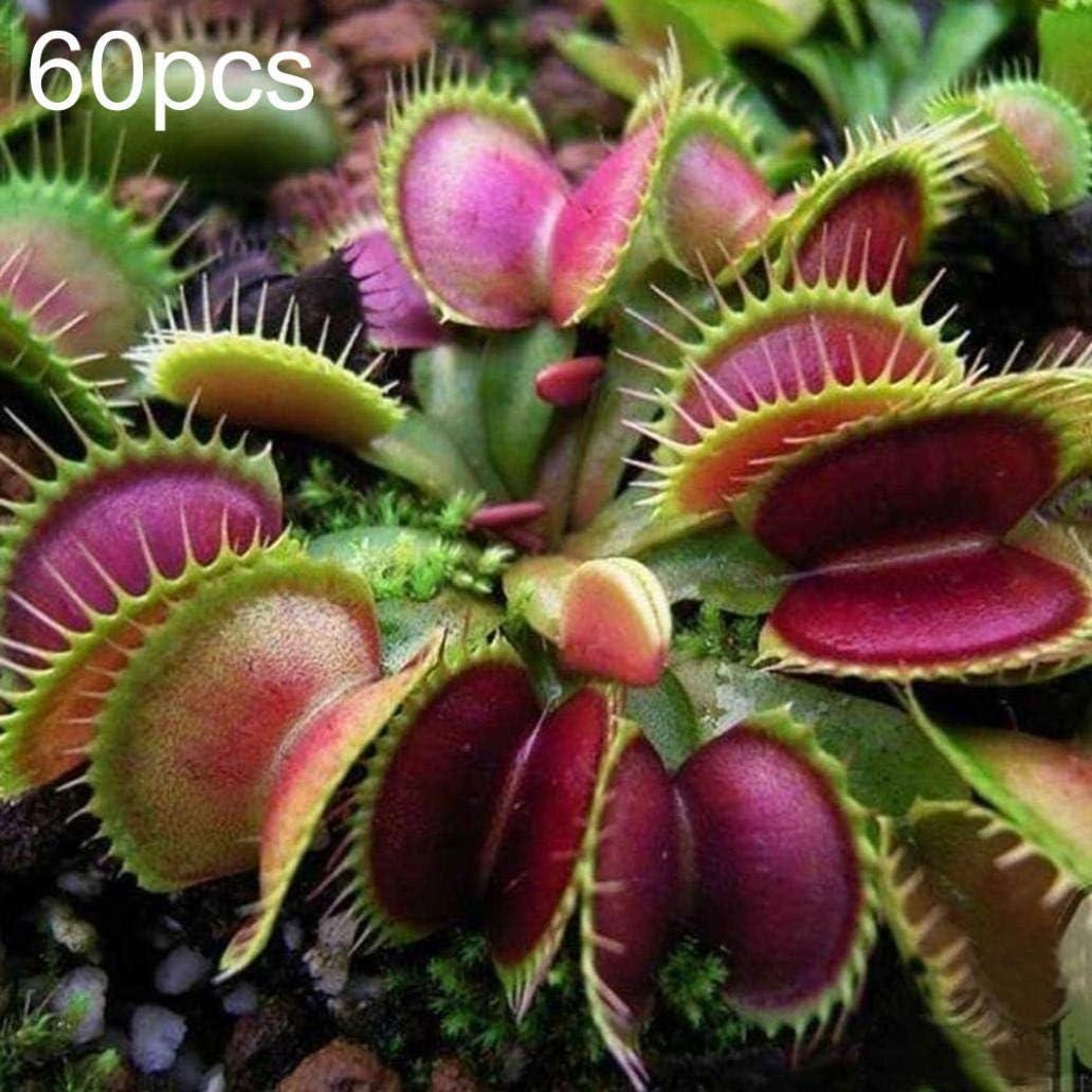 Uticon 60 / 120pcs Dionaea Del Atrapamoscas De Venus Las Semillas De La Planta Carn¨ªVora Bonsai Decor - 60pcs Dionaea Semillas