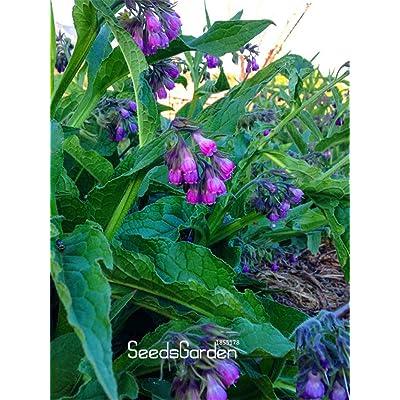New Seeds 2020! 100 Seeds/Lot Certified Organic True Comfrey Seeds, Non GMO, Certified Organic Heirloom Seed Packet(Medium : Garden & Outdoor