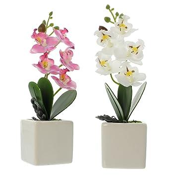 Frank Flechtwaren Deko-Orchidee im Topf im 2er Set