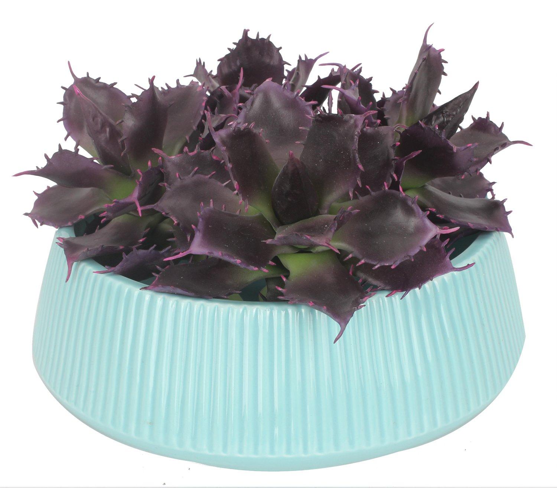 Duovlo-Artificial-Succulent-Plant-515-Inch-Faux-Succulents-Agave-potatorum-Flower-Arrangement-Craft-Wall-DIY-MaterialsPack-of-2