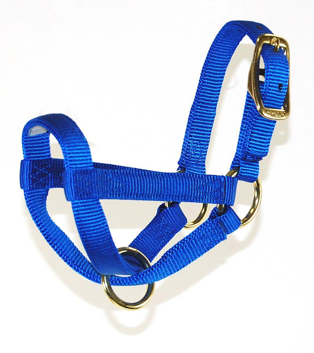 Hamilton 3 4-Inch Nylon Figure 8 Goat Halter, Kid, bluee