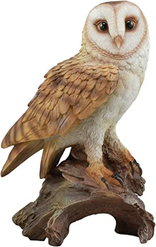 Ebros Realistic Nature Wildlife Common Barn Owl Perching On Tree Stump Statue 13.75 Tall Lifelike Nocturnal Owl Taxidermy with Glass Eyes Figurine