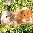 guinea pigs meerschweinchen 2019 kalender 2019 artwork. Black Bedroom Furniture Sets. Home Design Ideas