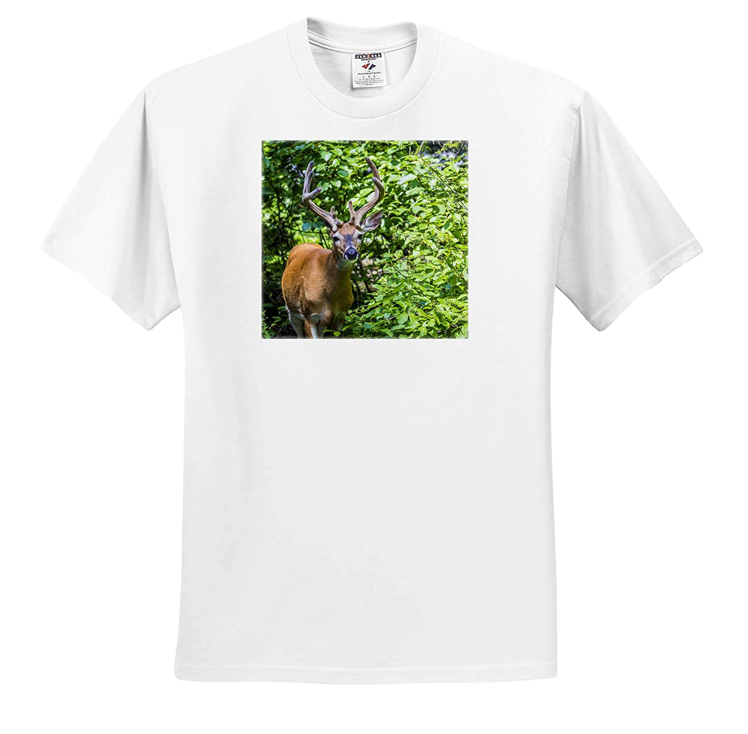 Deer 3dRose Danita Delimont White-Tailed Deer ts/_314929 Adult T-Shirt XL Glacier National Park Montana